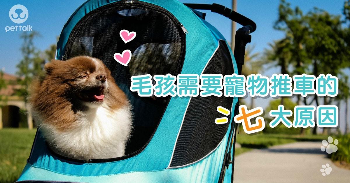 別等寶貝年老體弱才考慮,毛孩需要寵物推車的七大原因|PetTalk愛寵健康談