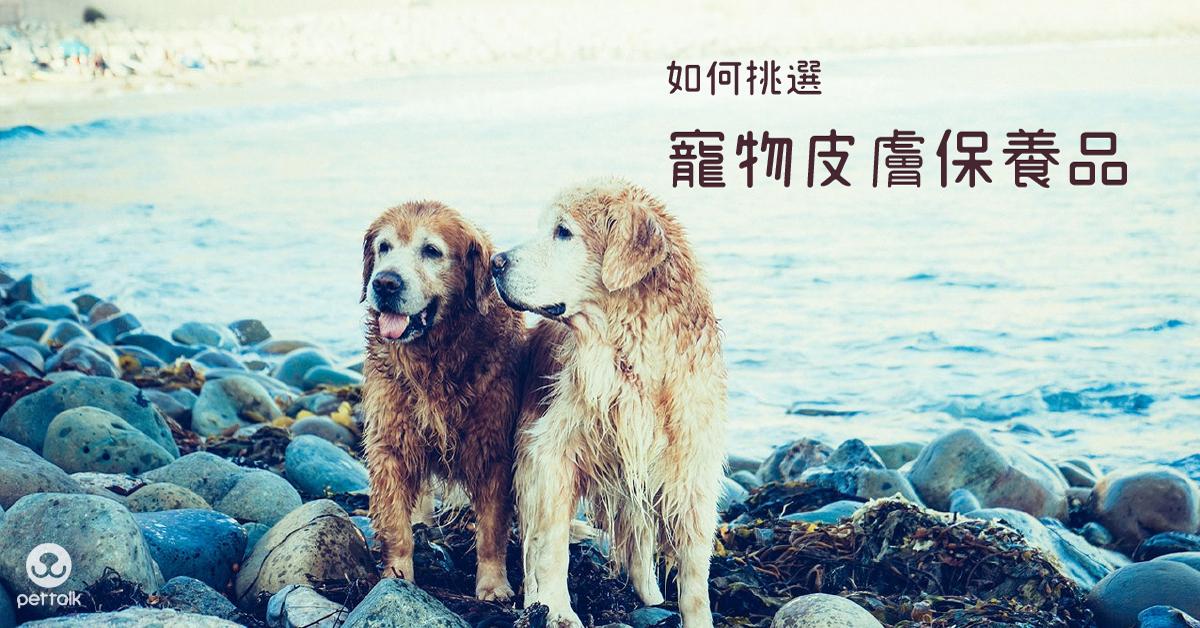 如何挑選寵物皮膚保養品|PetTalk愛寵健康談
