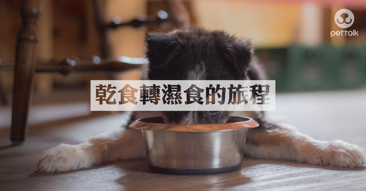 貓狗乾飼料轉濕食的路|PetTalk愛寵鮮食堂
