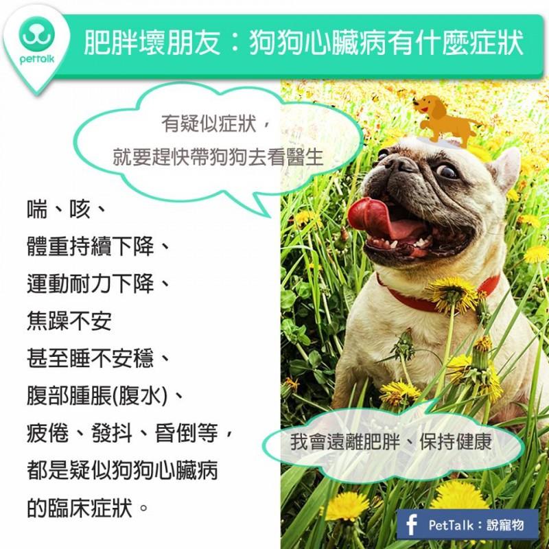 【PETTALK小學堂】肥胖壞朋友:狗狗心臟病有什麼症狀