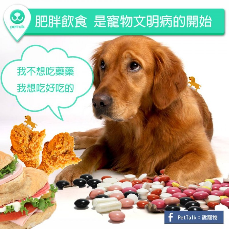 【PETTALK小學堂】肥胖飲食,是寵物文明病的開始
