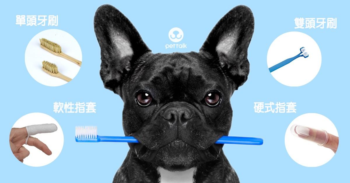 如何幫毛孩挑選合適的刷牙工具?|PetTalk愛寵健康談