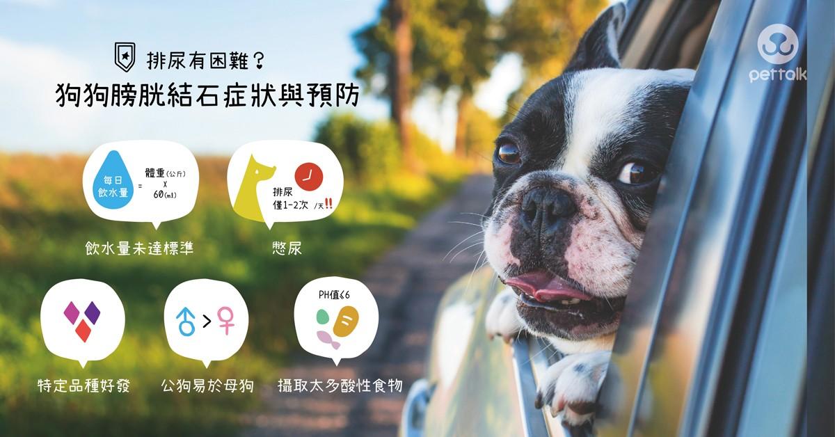 排尿有困難?狗狗膀胱結石症狀與預防|專業獸醫師—陳郁晴醫師