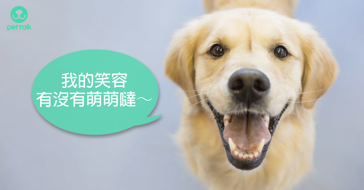 還給毛孩汪汪大眼,乾眼症治療方法|專業獸醫—羅勝吉