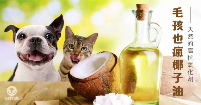 毛孩也瘋椰子油|PetTalk愛寵鮮食堂
