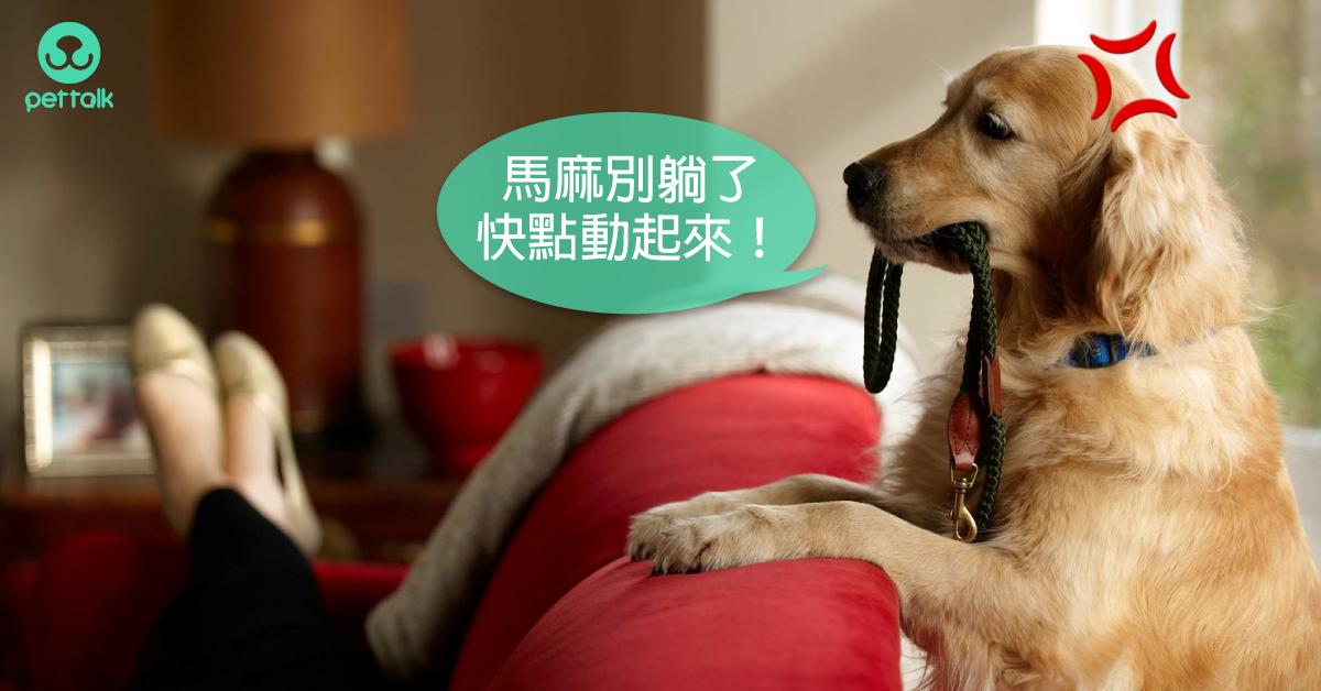狗狗出門就爆衝?正確遛狗有撇步|專業獸醫—朱道南