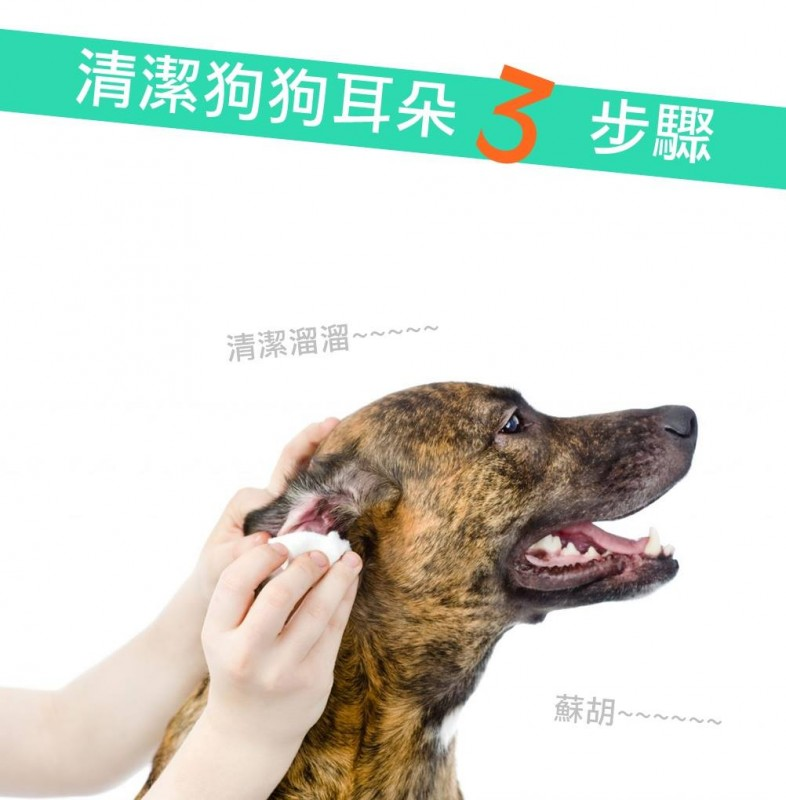 【PETTALK小學堂】清潔耳朵三步驟
