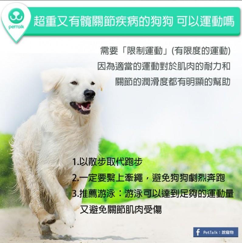 【PETTALK小學堂】超重又有髖關節疾病的狗狗可以運動嗎?