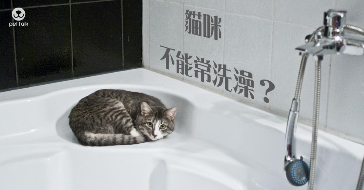貓貓多久洗一次澡|PetTalk愛寵健康談
