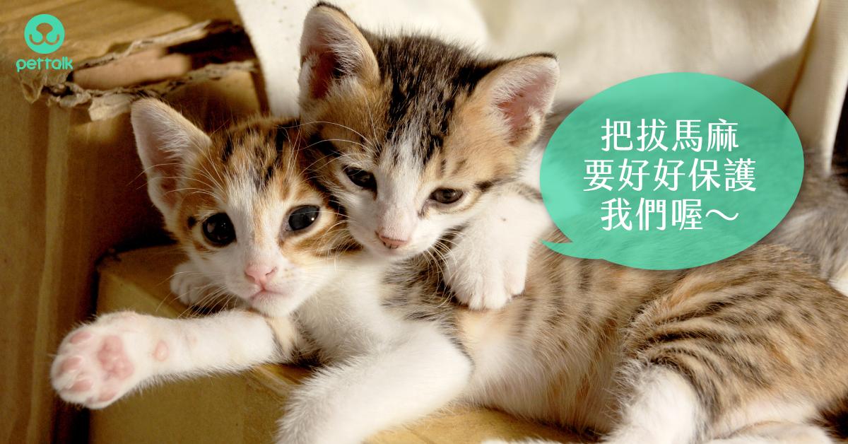 貓爸媽不可不知【貓咪常見病毒性疾病】|專業獸醫—吳展祥