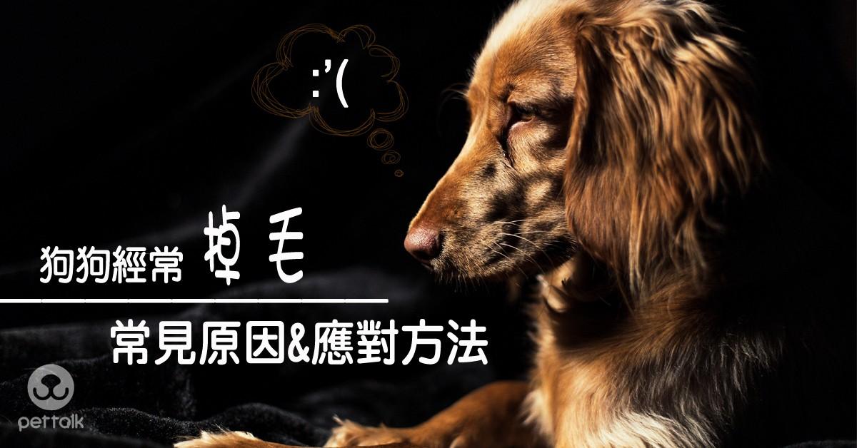 狗狗經常掉毛的常見原因與應對方法|專業獸醫師—翁敏捷醫師