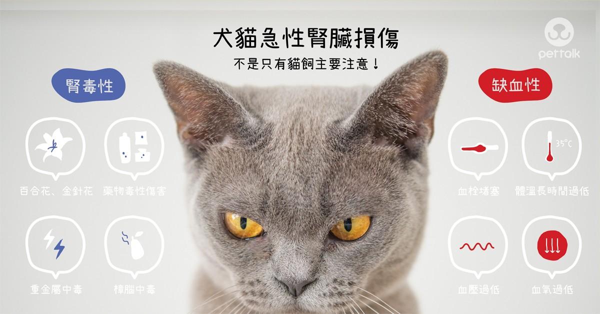 不是只有貓飼主要注意!犬貓急性腎臟損傷|專業獸醫師—陳正傑醫師
