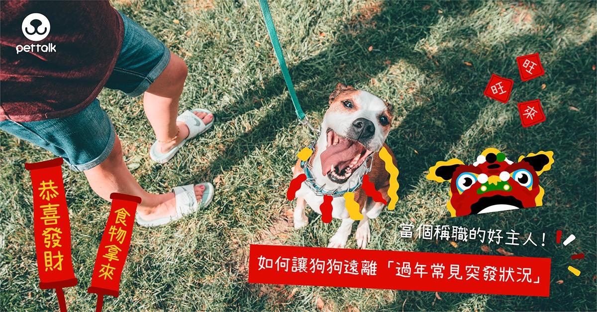 當個稱職的好主人!如何讓狗狗遠離「過年常見突發狀況」|專業獸醫師—何礎袁醫師