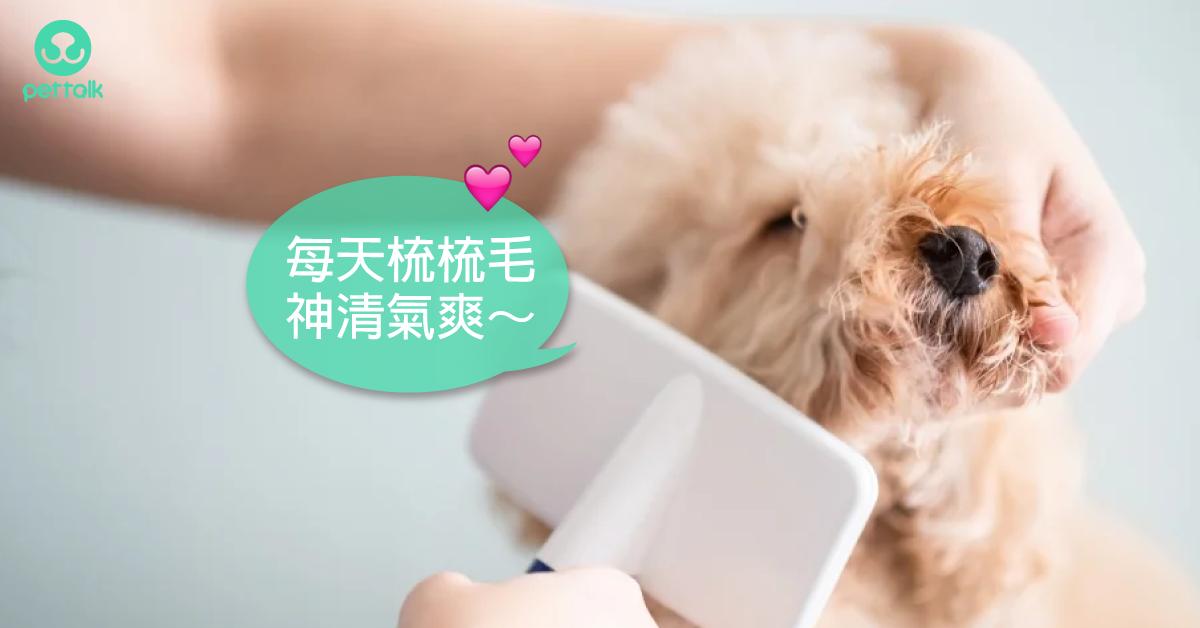 5分鐘學會狗狗梳毛重點和技巧|寵物美容老師—林文琳