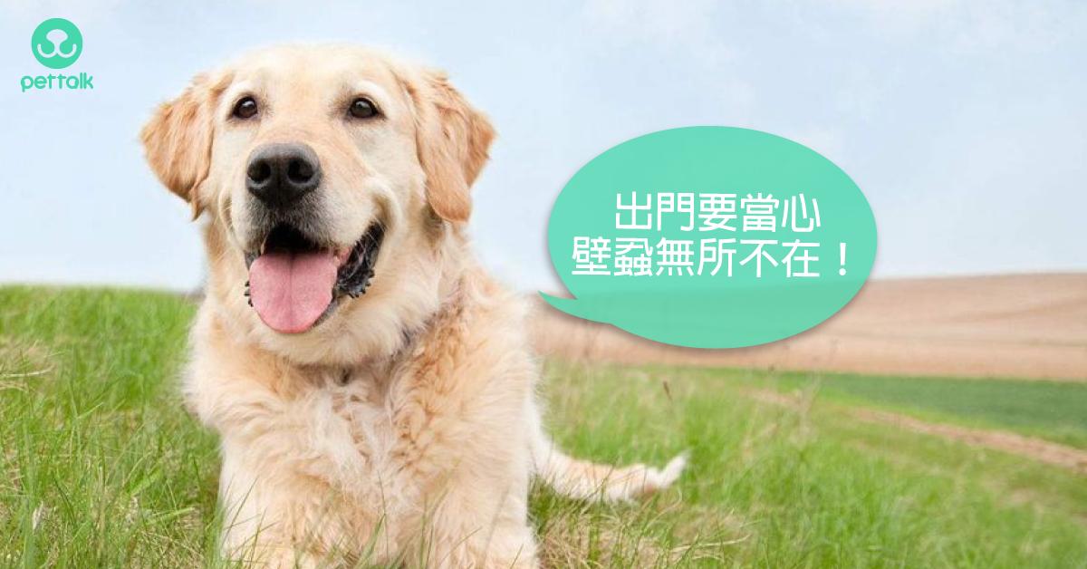 一點都不夢幻的可怕疾病—犬艾利希體症|專業獸醫—林源盛