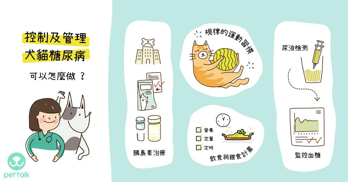 控制及管理犬貓糖尿病,可以怎麼做?|專業獸醫師—陳郁晴醫師