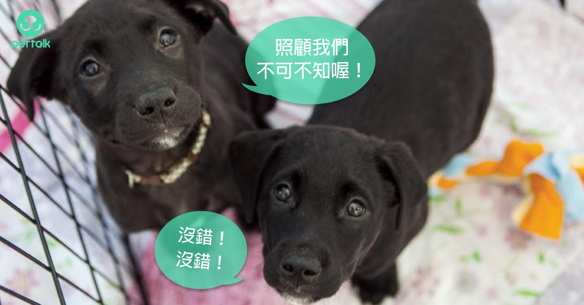 新手狗爸媽更不能輕忽!狗狗得了「犬細小病毒」該怎麼辦?|專業獸醫—王善群