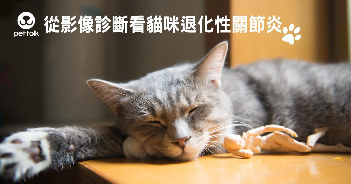 從影像診斷看貓咪退化性關節炎|PetTalk愛寵健康談