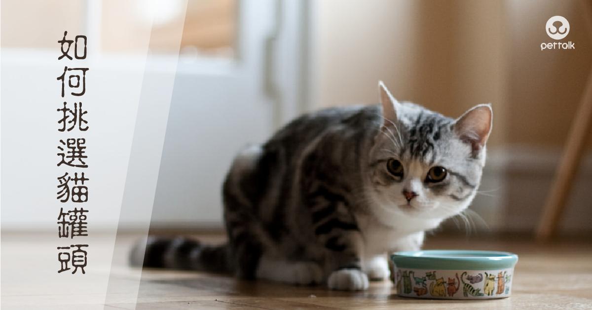 該如何挑選貓罐頭|PetTalk愛寵健康談
