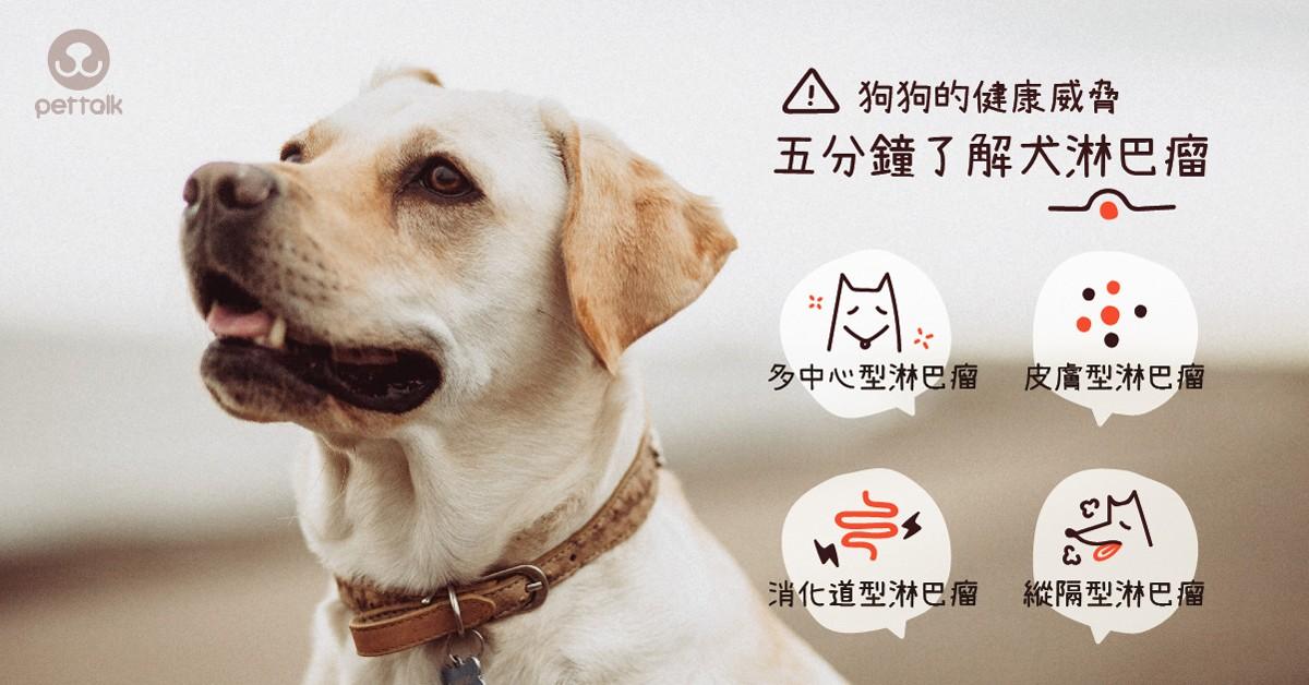 狗狗的健康威脅—五分鐘了解犬淋巴瘤|專業獸醫師—洪奇正醫師