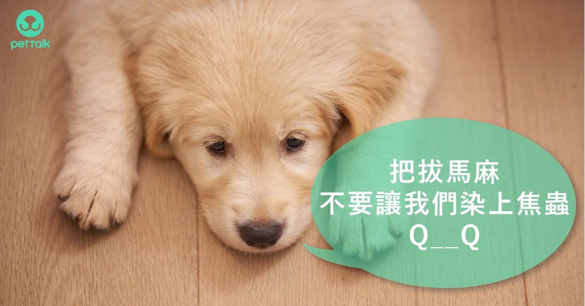 壁蝨季節報到!讓狗狗貧血又厭食的犬焦蟲症|專業獸醫—吳展祥