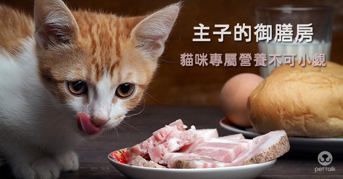 主子的御膳房,貓咪專屬營養不可小覷|PetTalk愛寵健康談