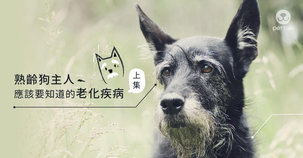 熟齡狗主人應該要知道的老化疾病(上集)|專業獸醫師—吳展祥醫師