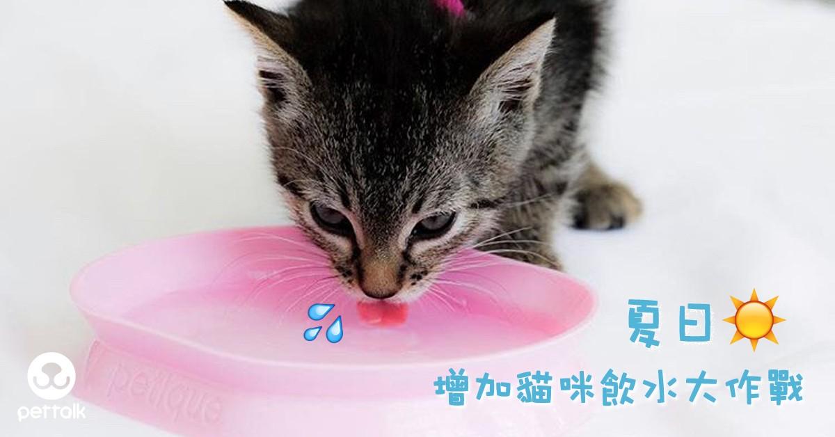 夏日增加貓咪飲水大作戰|PetTalk愛寵健康談