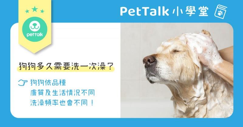 【PetTalk小學堂】狗狗多久需要洗一次澡??