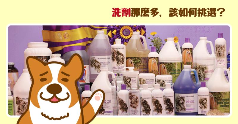 【PETTALK小學堂】為何寵物洗劑要分這麼多種?如何挑選使用?