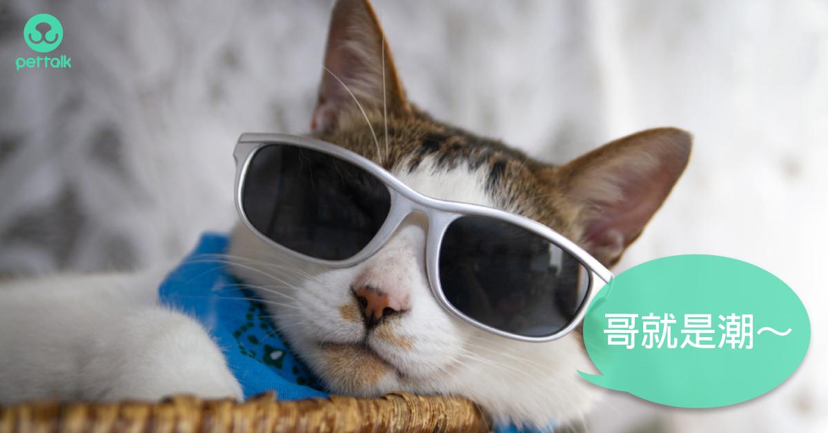 難不成是返老還童?貓咪甲狀腺機能亢進(下)|專業獸醫—吳展祥
