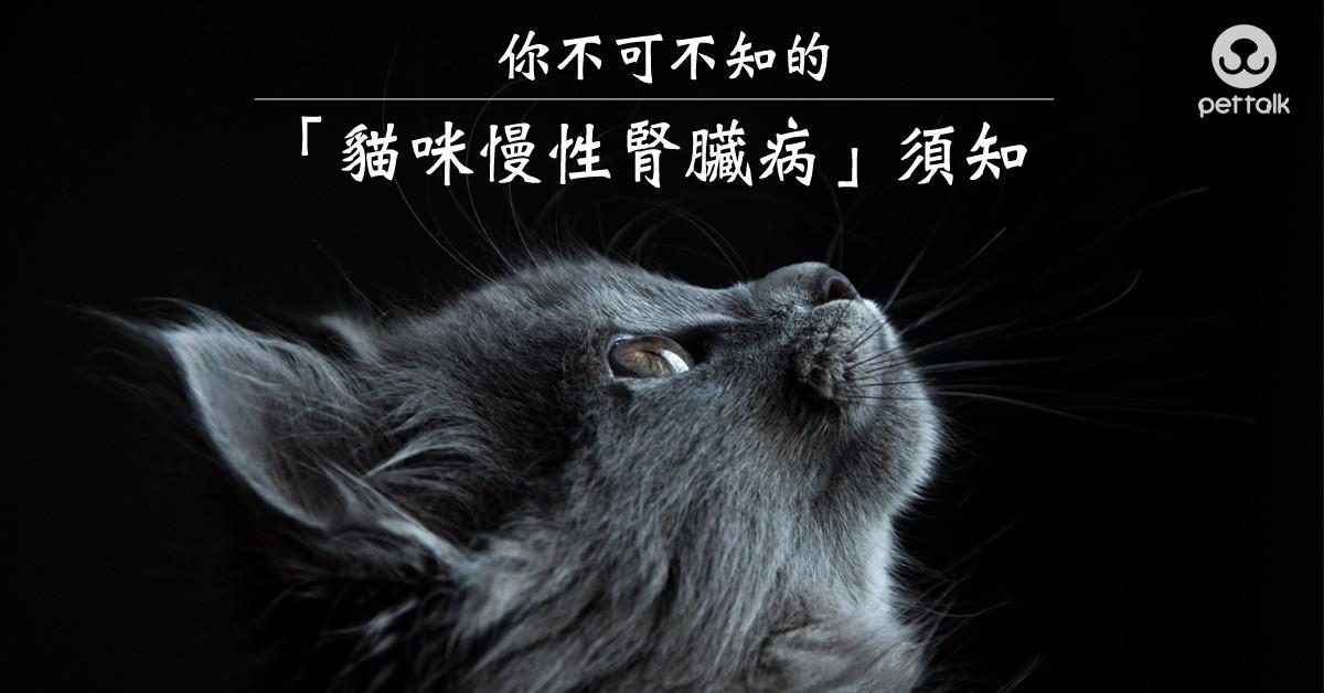 你不可不知的「貓咪慢性腎臟病」須知|PetTalk愛寵健康談
