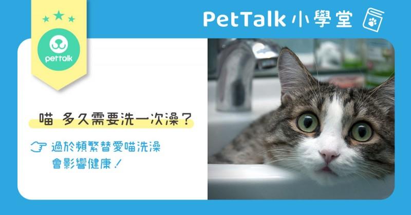 【寵吧!聊天室】貓貓多久需要洗一次澡??