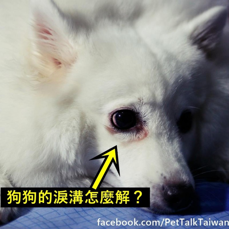 【PETTALK小學堂】狗狗的淚溝
