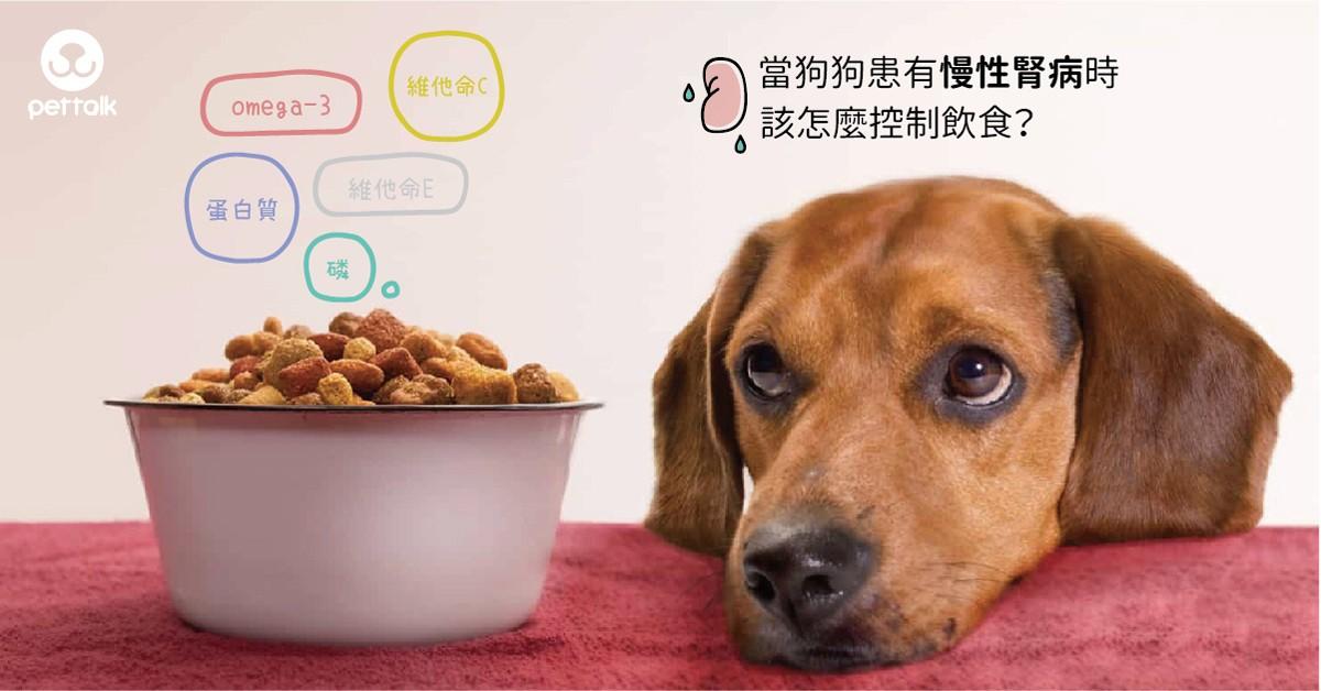 當狗狗患有慢性腎病時,該怎麼控制飲食?|專業獸醫師—吳展祥醫師