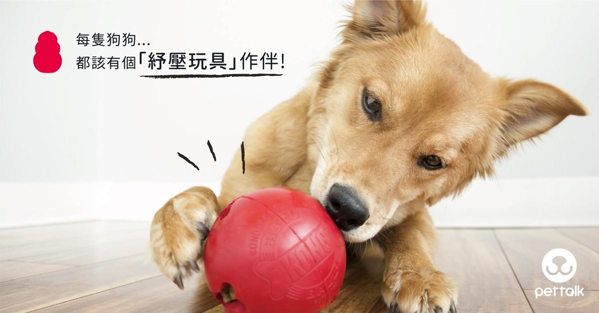 每隻狗狗都該有個「紓壓玩具」作伴|PetTalk愛寵健康談