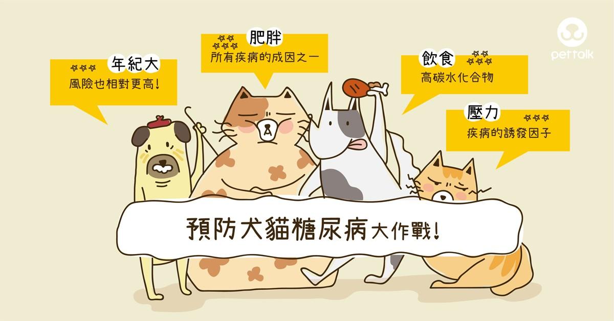 預防犬貓糖尿病大作戰|專業獸醫師—陳郁晴醫師