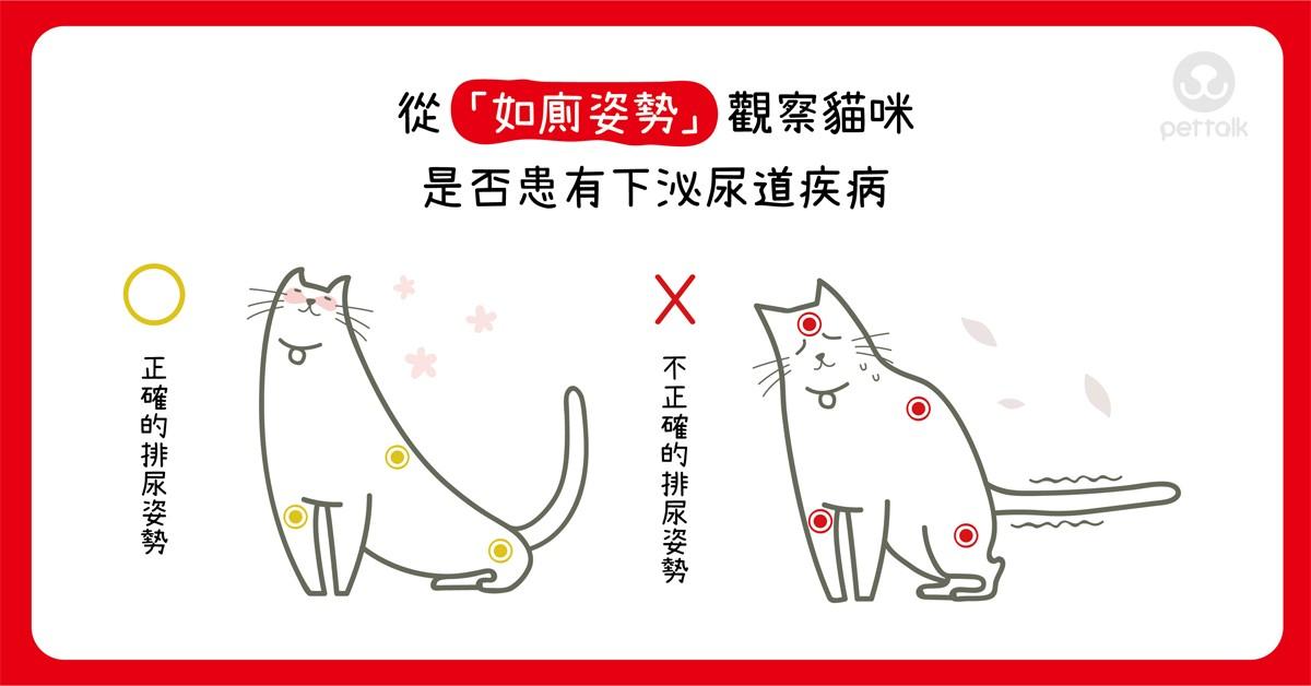 從「如廁姿勢」觀察貓咪是否患有下泌尿道疾病|專業獸醫師—吳展祥醫師