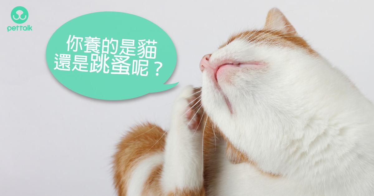 你知道貓咪比狗狗更容易被跳蚤纏上嗎?|專業獸醫—羅勝吉