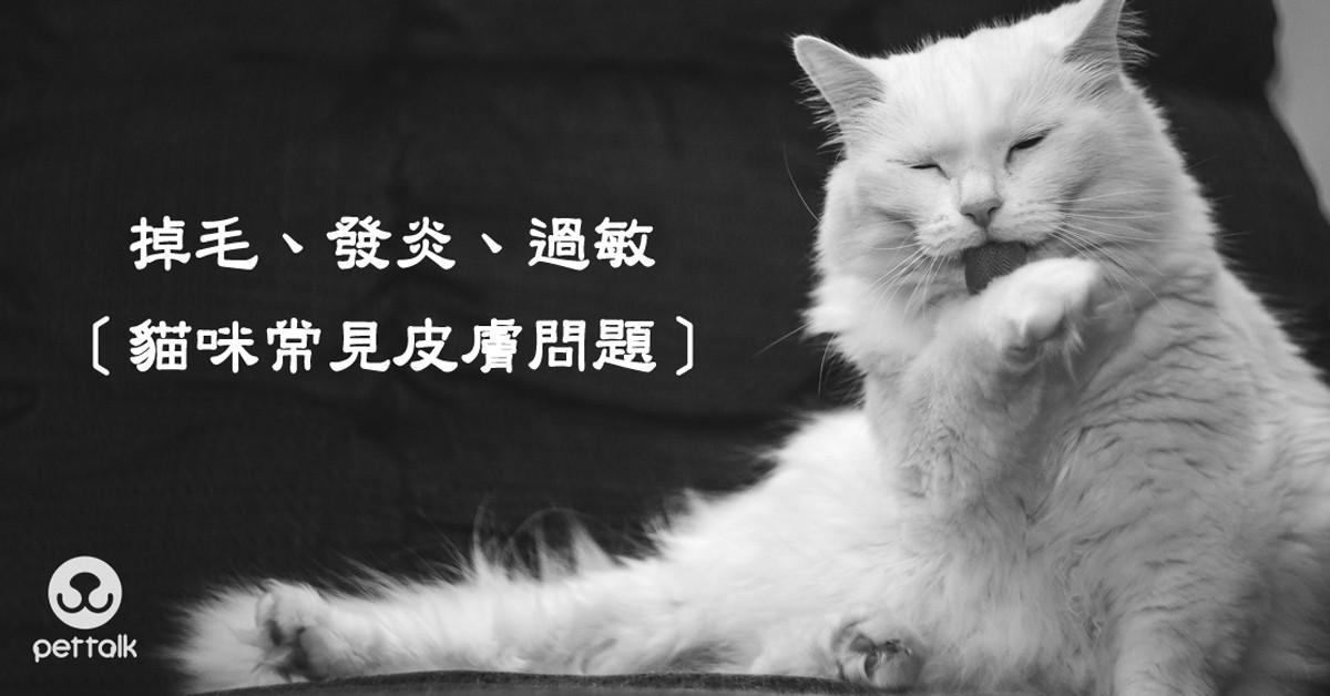 掉毛、發炎、過敏,貓咪常見皮膚問題|PetTalk愛寵健康談
