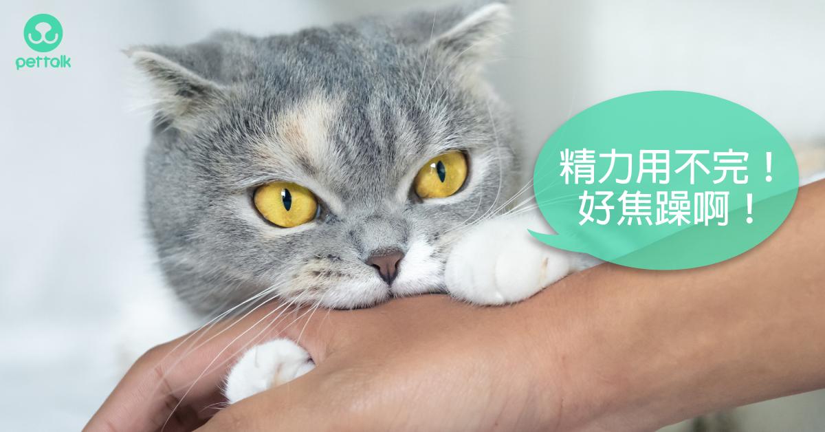 難不成是返老還童?貓咪甲狀腺機能亢進(上)|專業獸醫—吳展祥