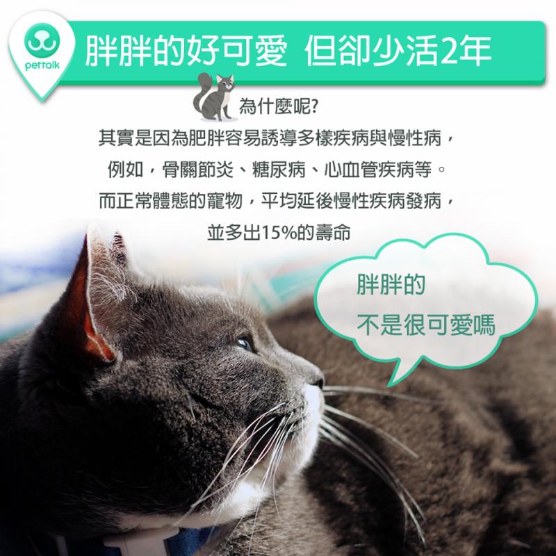 【PETTALK小學堂】胖貓胖狗好可愛,但卻為此犧牲2年壽命