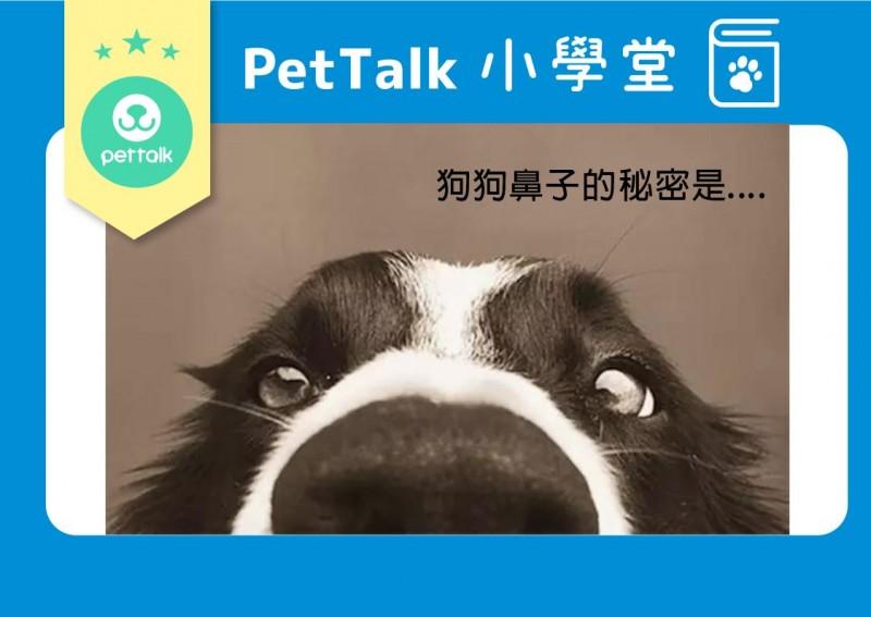 【PETTALK小學堂】狗狗鼻子小祕密