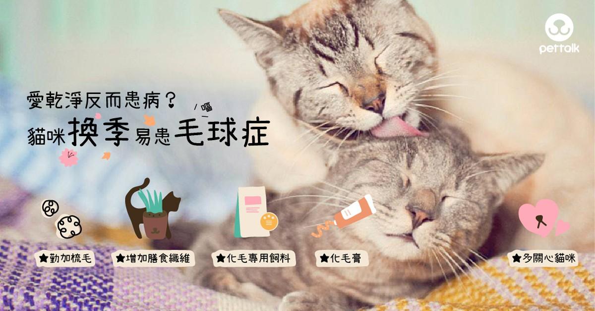 愛乾淨反而患病?貓咪換季易患毛球症|專業獸醫師—王允軍醫師