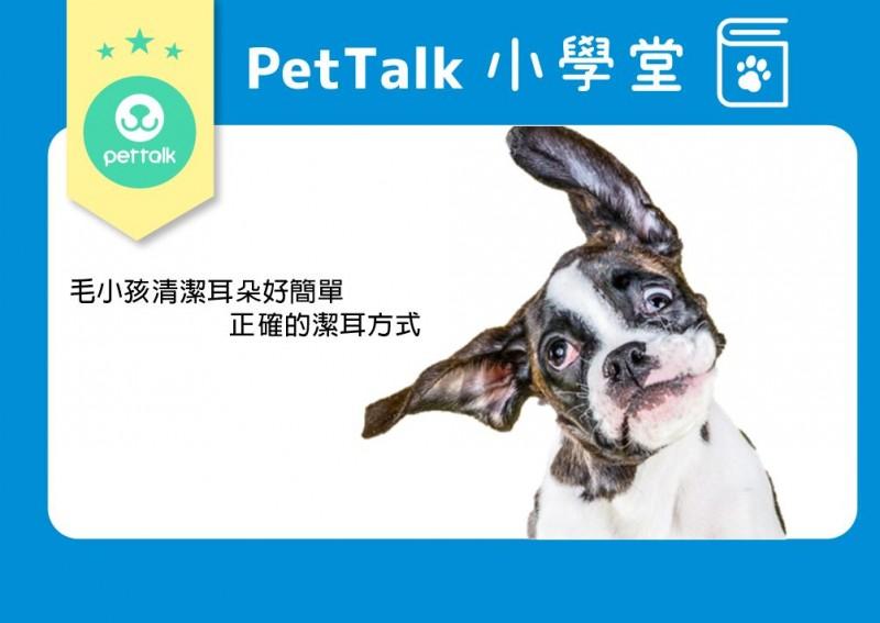 【PETTALK小學堂】毛小孩清潔耳朵好簡單-正確的潔耳方式