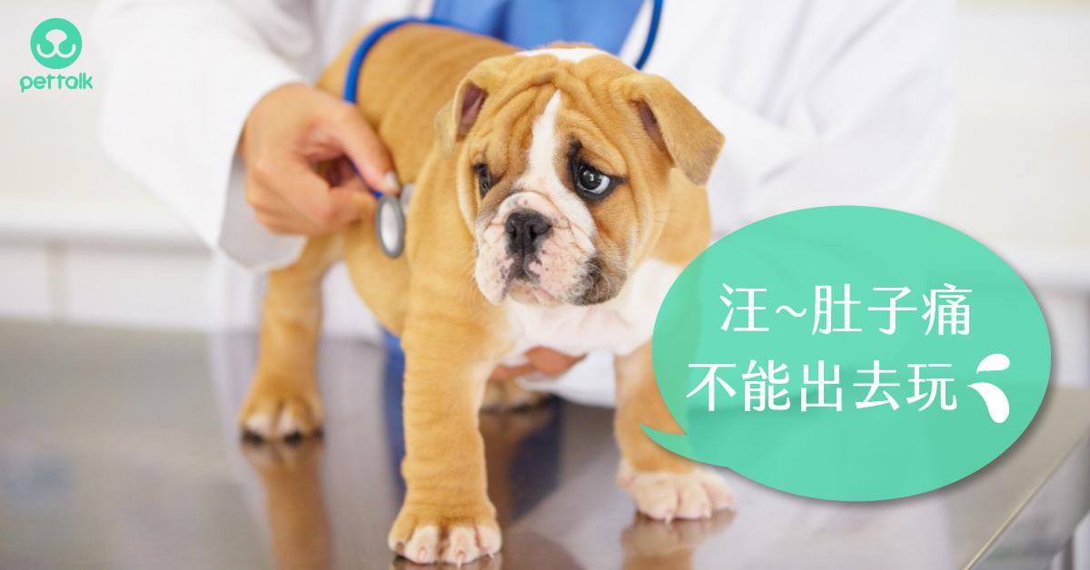 「急性腸胃炎」折騰狗狗也讓毛爸媽心疼|專業獸醫—林銘璋