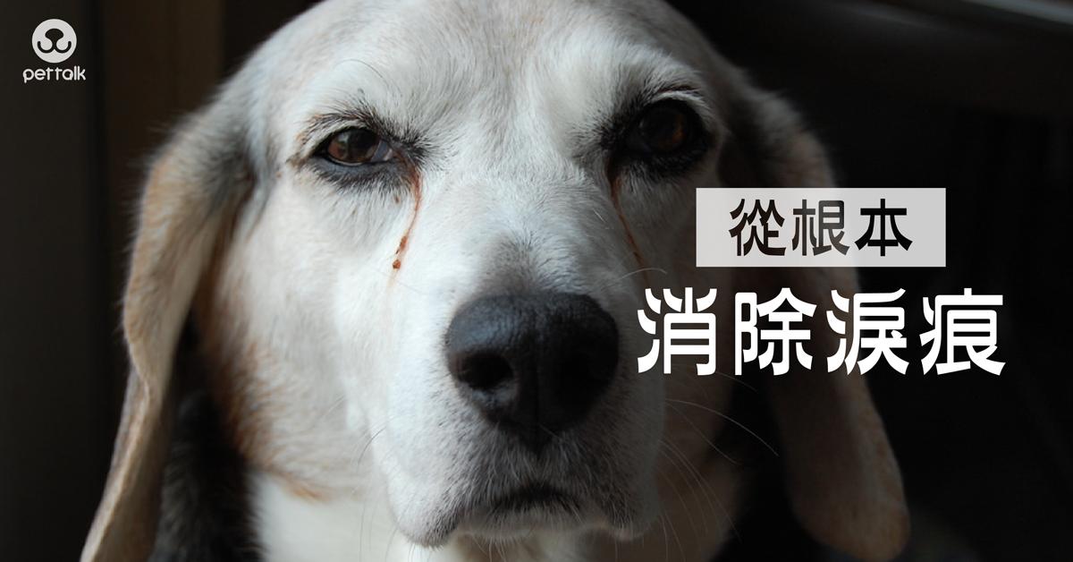 淚痕的清潔辦法|PetTalk愛寵健康談