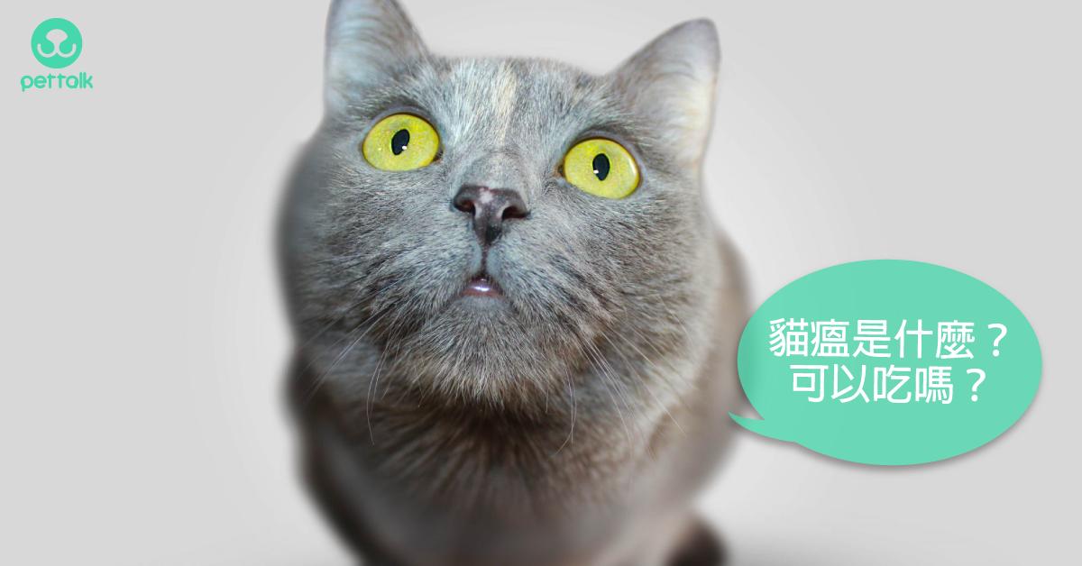 什麼是貓瘟?常聽到但不認識的貓咪傳染病|專業獸醫—李侯承