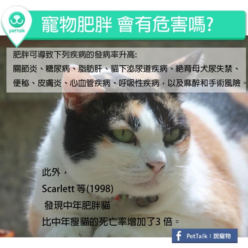 【PETTALK小學堂】寵物肥胖,會有危害嗎?