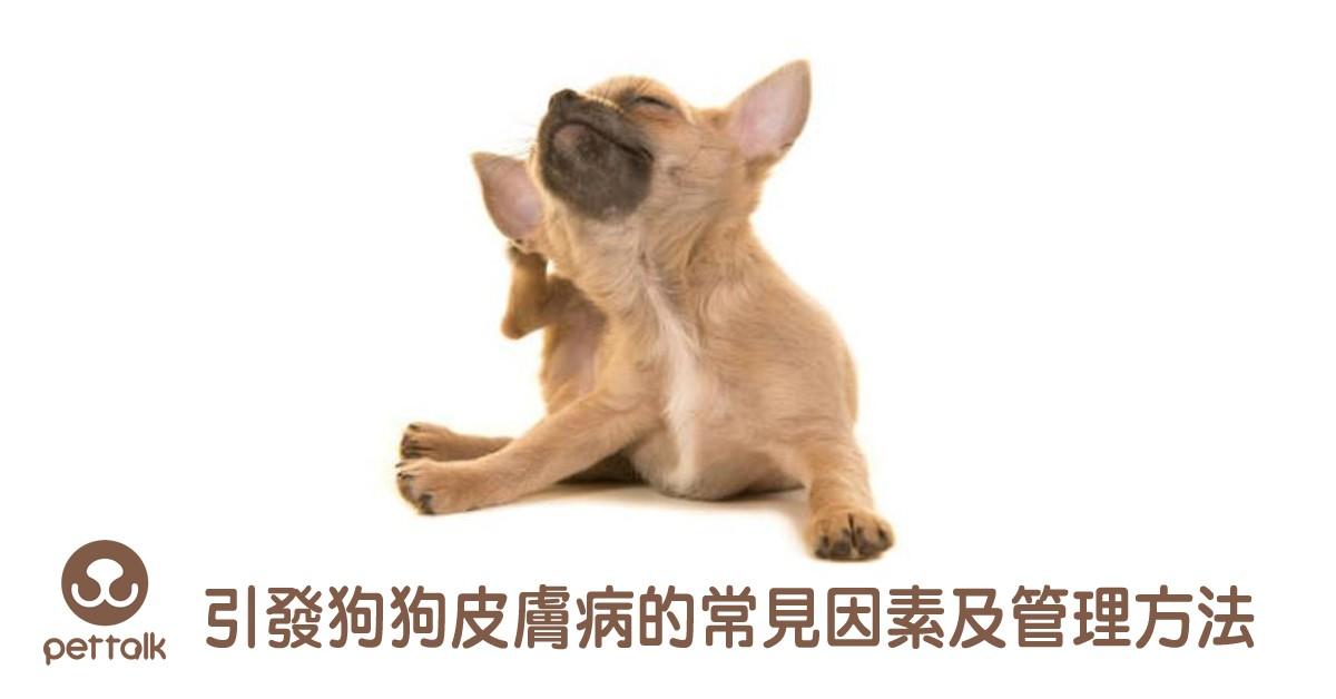 引發狗狗皮膚病的常見因素及管理方法|專業獸醫師—王善群醫師